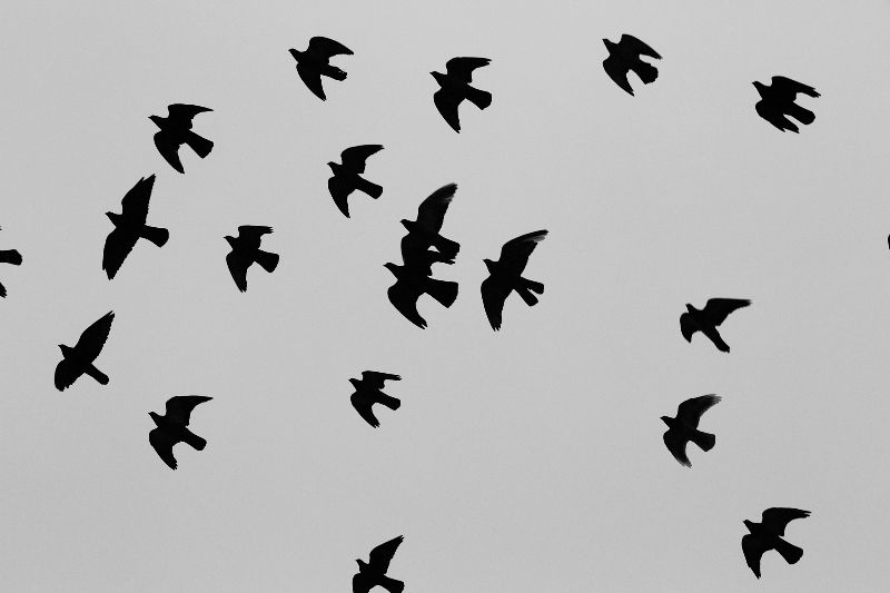 2014-11-Life-of-Pix-free-stock-photos-birds-pattern-flight-Leeroy